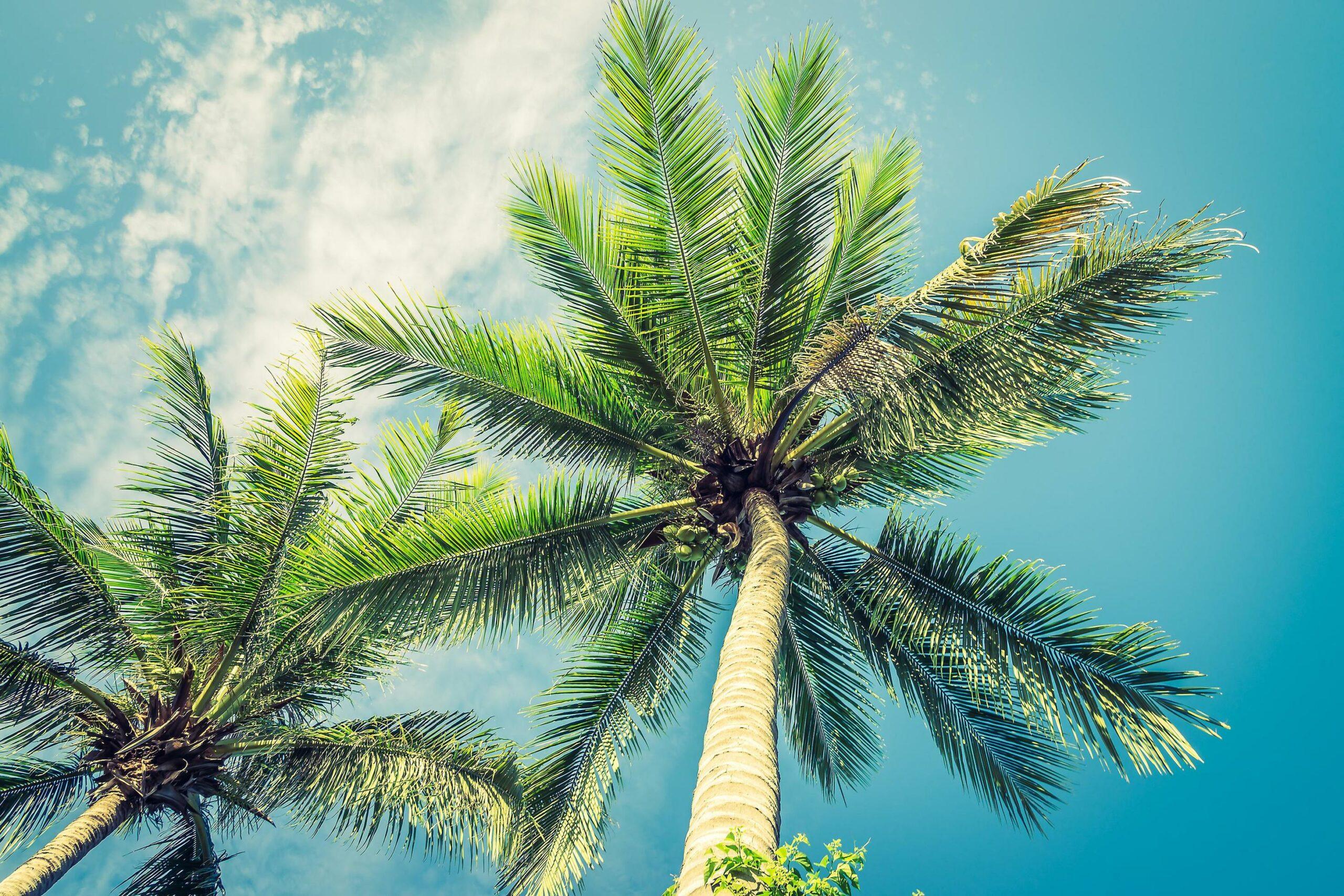 Preset-Tropis-scaled